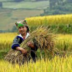 Mu Cang Chai, Vietnam Adventure Packages