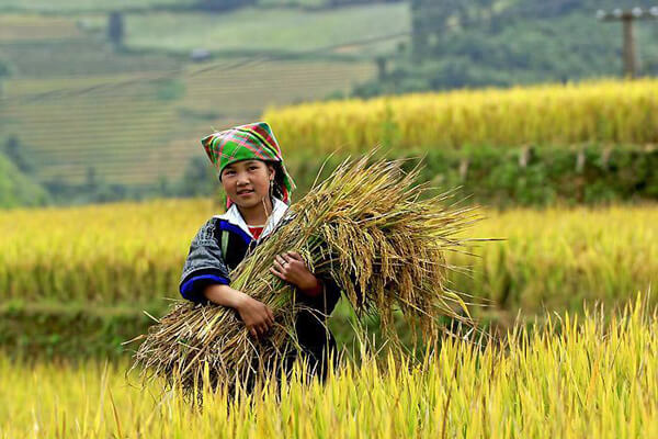 Mu Cang Chai, Vietnam Packages