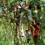 Tan Phong Island, Vietam Tour Packages