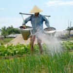 Tra Que Villages, Vietnam Local tours