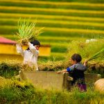 children with rice paddy field, adventure in Vietnam tours