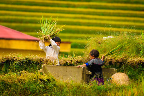 children with rice paddy field, Vietnam tours