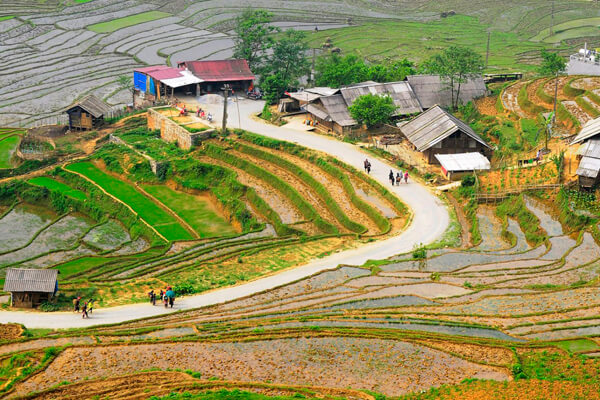 Rice paddy field, Vacation in Vietnam