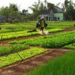 Tra Que Village, Tour in Vietnam