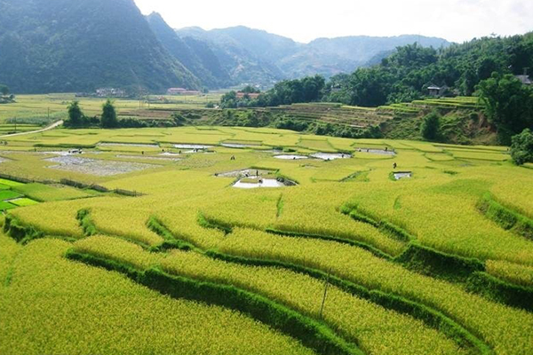 the terraces in Lung Van, Vietnam local tour packages