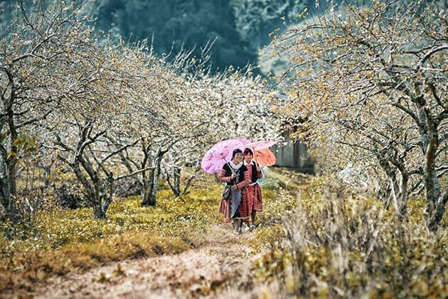 Moc Chau in Autumn, Vietnam tour day trips