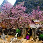 ha giang village vietnam tours