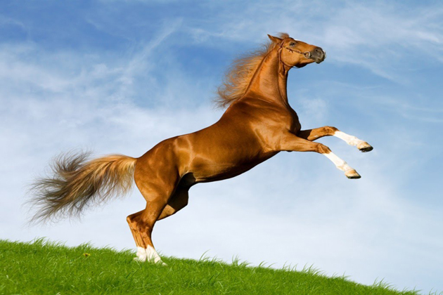 horse vietnamese zodiac sign
