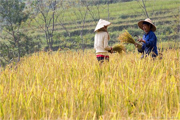 nghia lo vietnam