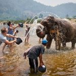 Elephant bathing at Don Village, Vietnam local Tours