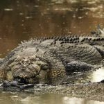 Nam Cat Tien Crocodile, Vietnam tours