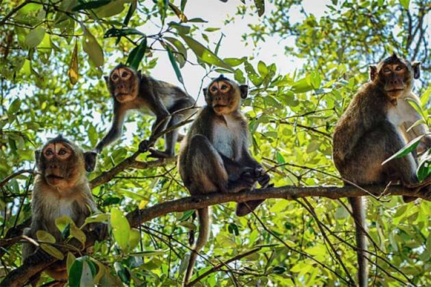 Cat Ba National Park, Vietnam tours Pakages
