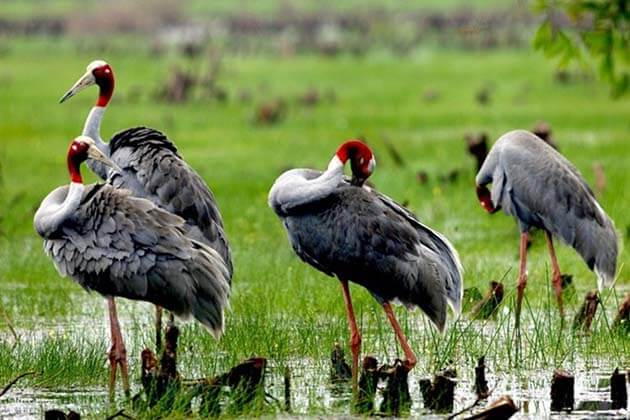 Bird Watching at Tram Chim National Park, Vietnam tours
