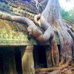Ta Prohm Temple, Cambodia Vietnam Tours